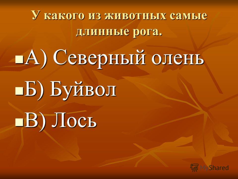 У какого из животных самые длинные рога. А) Северный олень А) Северный олень Б) Буйвол Б) Буйвол В) Лось В) Лось