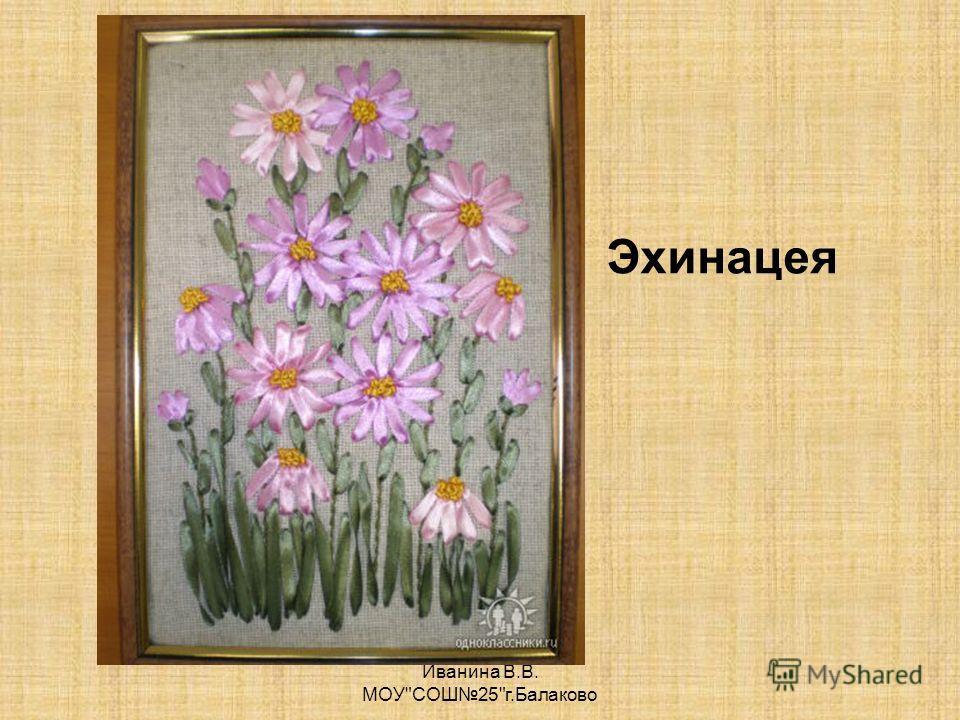 Иванина В.В. МОУСОШ25г.Балаково Эхинацея