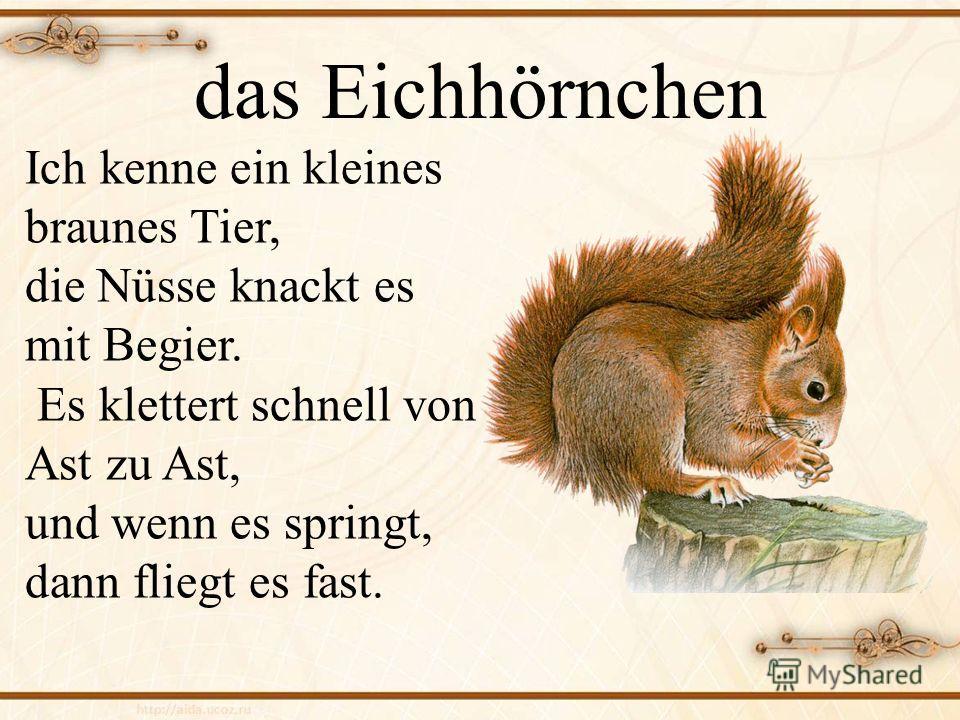 das Eichhörnchen Ich kenne ein kleines braunes Tier, die Nüsse knackt es mit Begier. Es klettert schnell von Ast zu Ast, und wenn es springt, dann fliegt es fast.