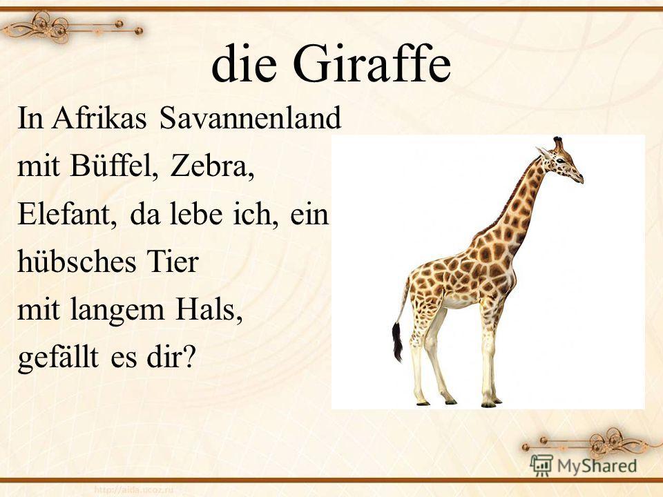 die Giraffe In Afrikas Savannenland mit Büffel, Zebra, Elefant, da lebe ich, ein hübsches Tier mit langem Hals, gefällt es dir?