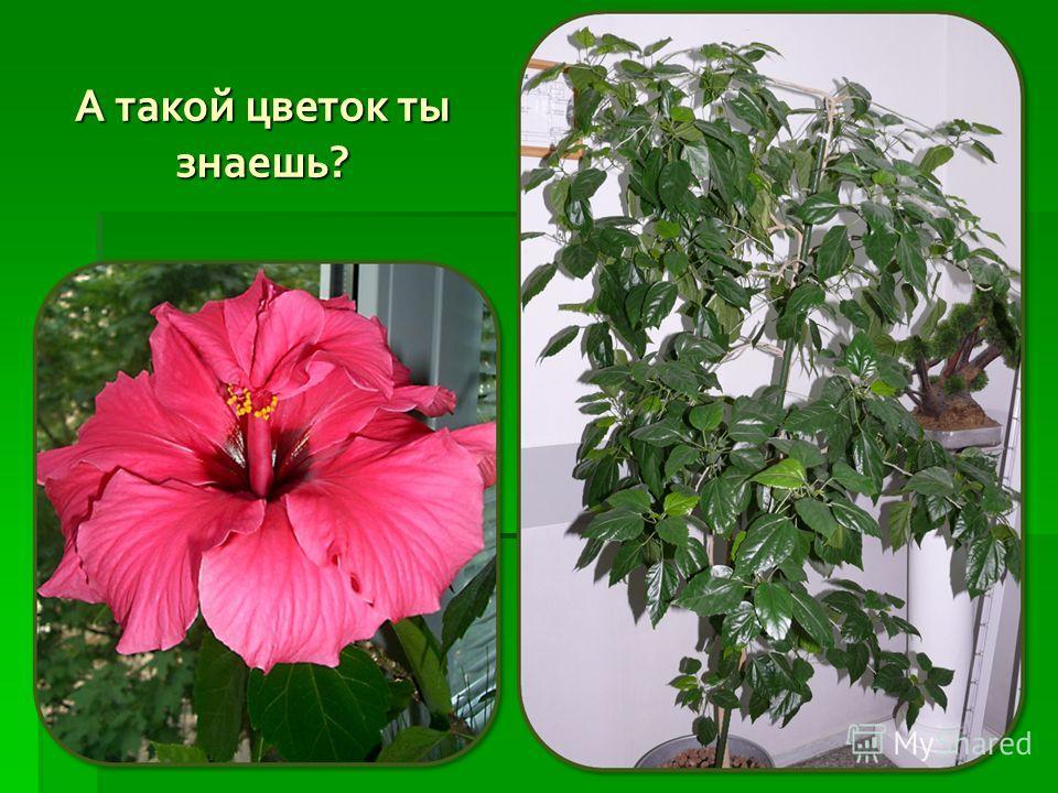 А такой цветок ты знаешь?