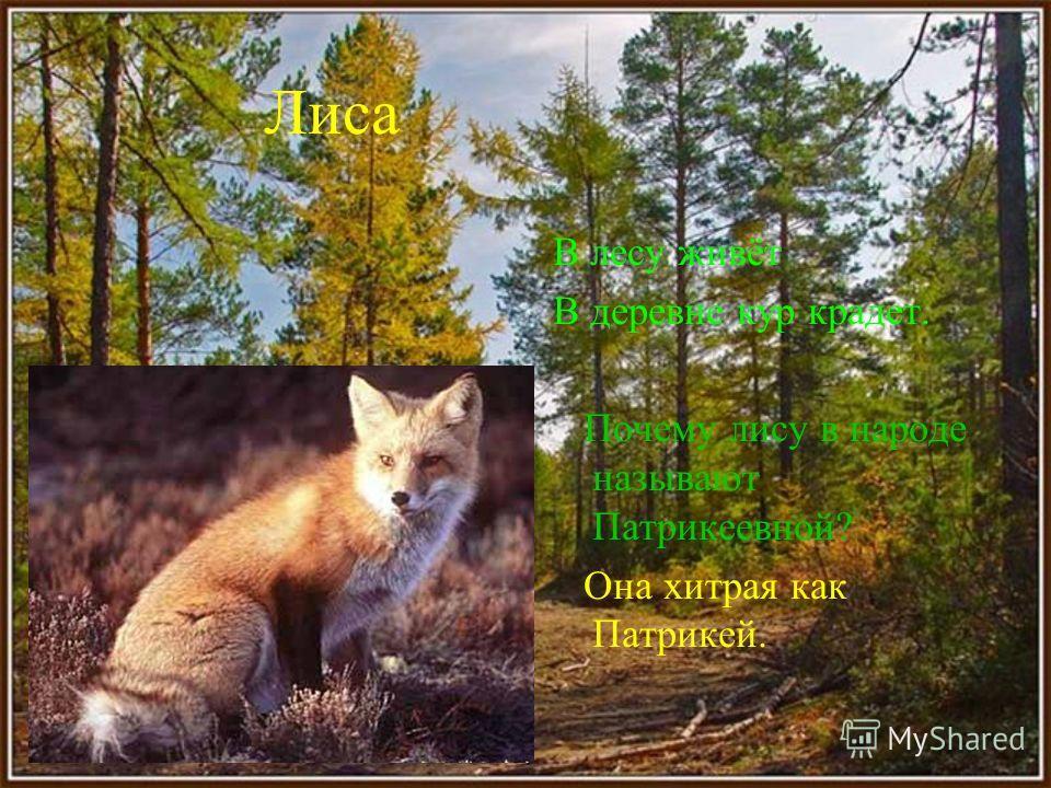 Белка Не мышь, не птица, В лесу резвится, На деревьях живёт И орешки грызёт. Чем питается белка в зимнее время? Находит запасы приготовленные с осени.