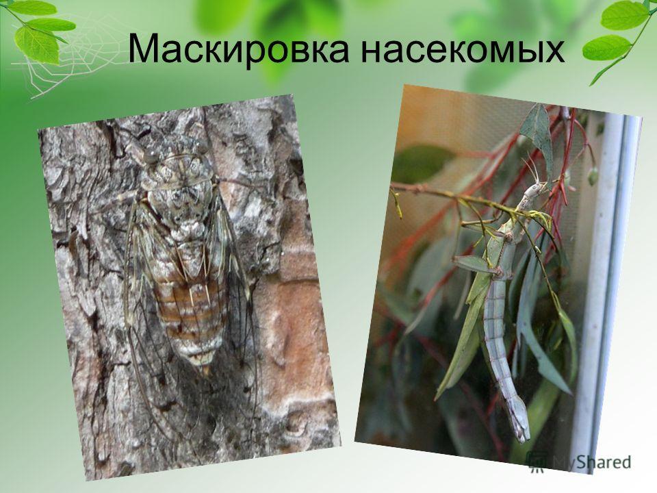 Маскировка насекомых