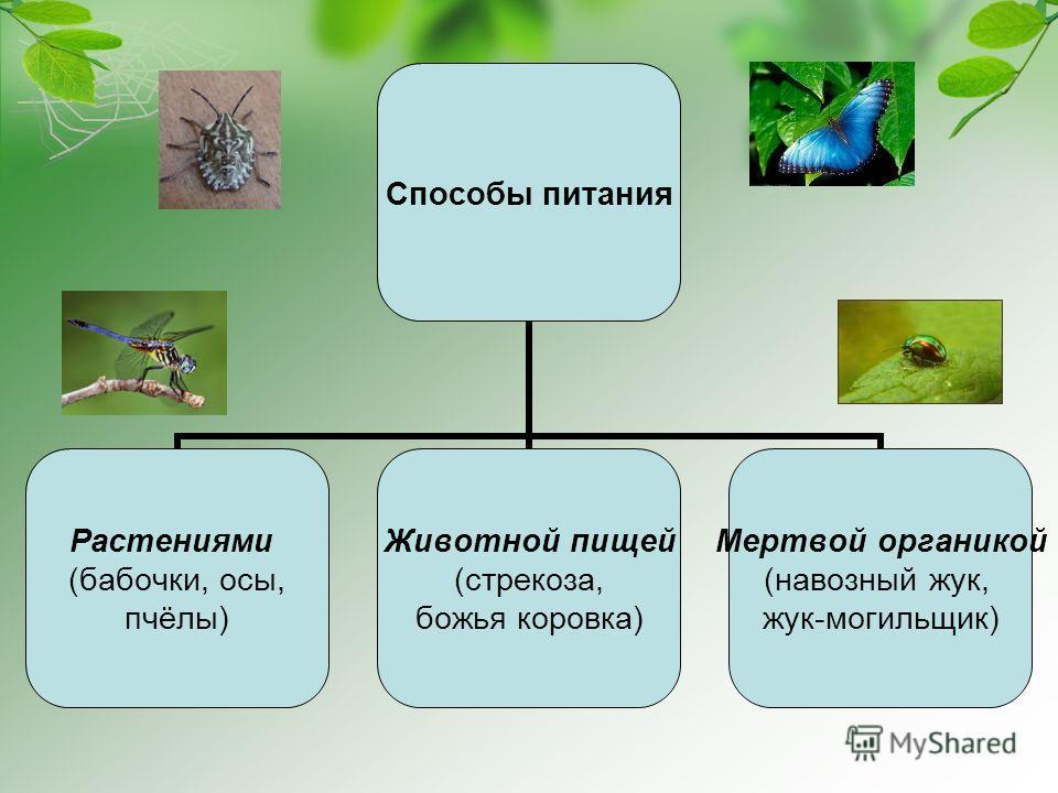 Способы питания Растениями (бабочки, осы, пчёлы) Животной пищей (стрекоза, божья коровка) Мертвой органикой (навозный жук, жук-могильщик)