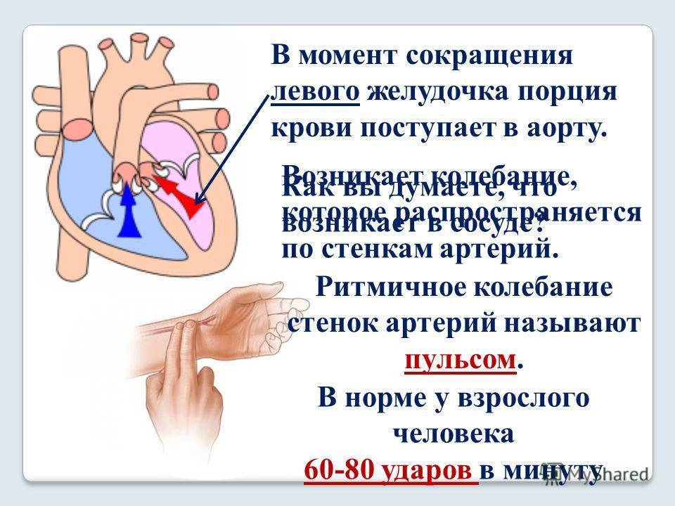 В момент сокращения левого желудочка порция крови поступает в аорту. Как вы думаете, что возникает в сосуде? Возникает колебание, которое распространяется по стенкам артерий. Ритмичное колебание стенок артерий называют пульсом. В норме у взрослого че