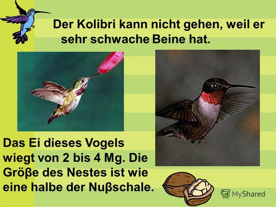 Der Kolibri kann nicht gehen, weil er sehr schwache Beine hat. Das Ei dieses Vogels wiegt von 2 bis 4 Mg. Die Gröβe des Nestes ist wie eine halbe der Nuβschale.