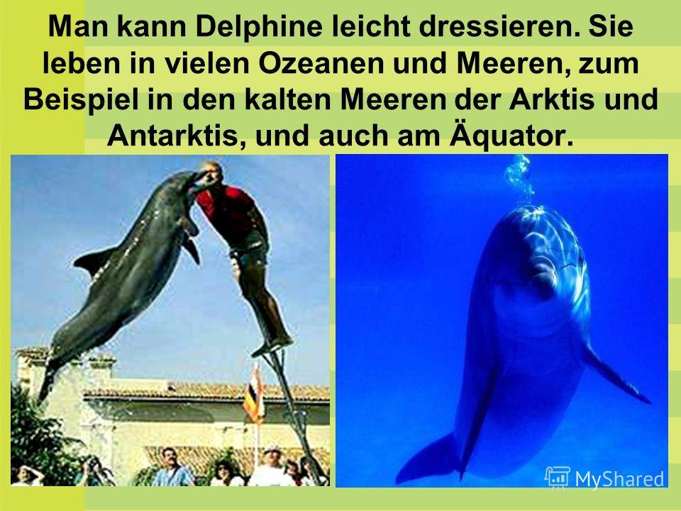 Man kann Delphine leicht dressieren. Sie leben in vielen Ozeanen und Meeren, zum Beispiel in den kalten Meeren der Arktis und Antarktis, und auch am Äquator.