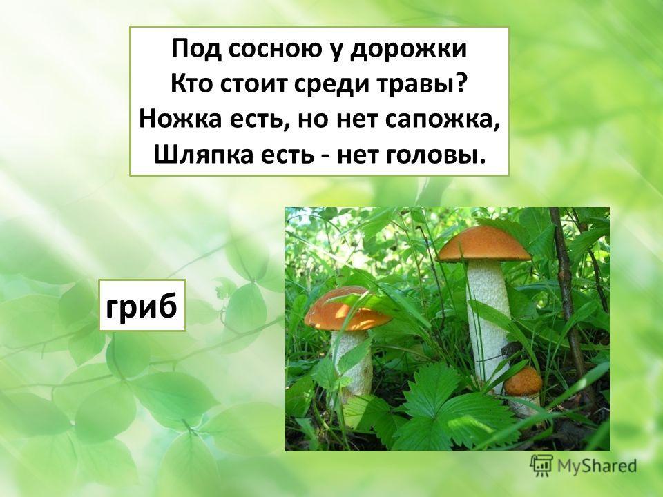 Под сосною у дорожки Кто стоит среди травы? Ножка есть, но нет сапожка, Шляпка есть - нет головы. гриб