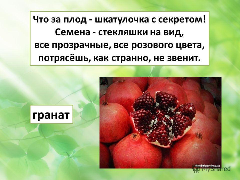 Что за плод - шкатулочка с секретом! Семена - стекляшки на вид, все прозрачные, все розового цвета, потрясёшь, как странно, не звенит. гранат