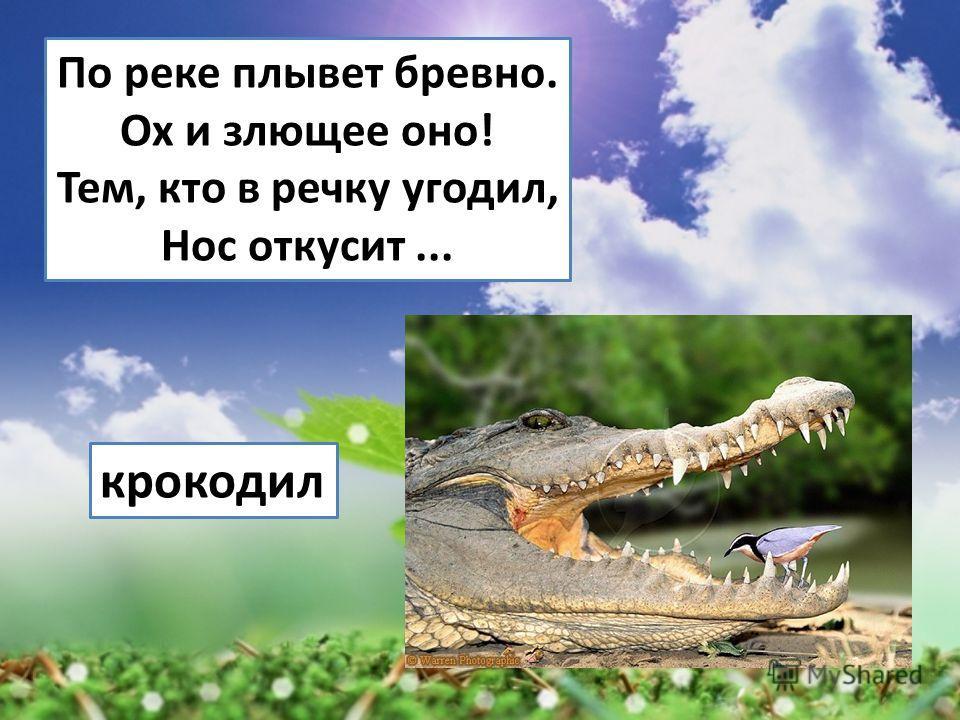 По реке плывет бревно. Ох и злющее оно! Тем, кто в речку угодил, Нос откусит... крокодил