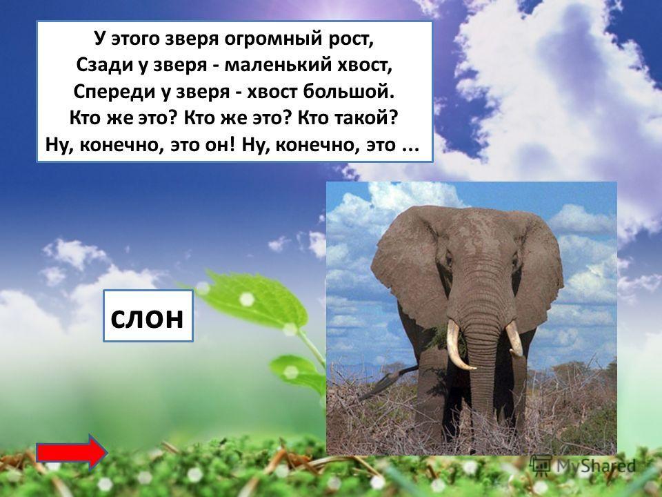 У этого зверя огромный рост, Сзади у зверя - маленький хвост, Спереди у зверя - хвост большой. Кто же это? Кто же это? Кто такой? Ну, конечно, это он! Ну, конечно, это... слон