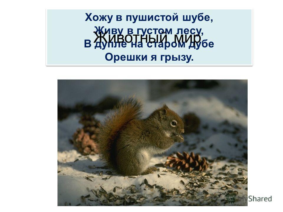 Хожу в пушистой шубе, Живу в густом лесу, В дупле на старом дубе Орешки я грызу. Хожу в пушистой шубе, Живу в густом лесу, В дупле на старом дубе Орешки я грызу. Животный мир