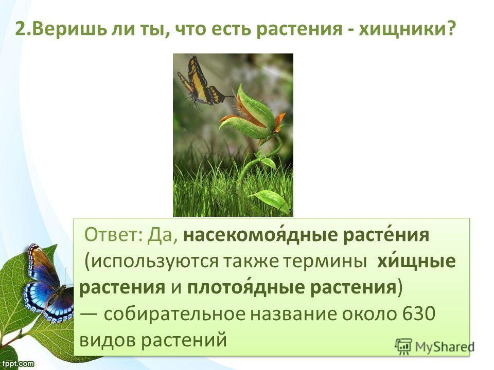 Ответ: Да, насекомоя́дные расте́ния (используются также термины хи́щные растения и плотоя́дные растения) собирательное название около 630 видов растений Ответ: Да, насекомоя́дные расте́ния (используются также термины хи́щные растения и плотоя́дные ра