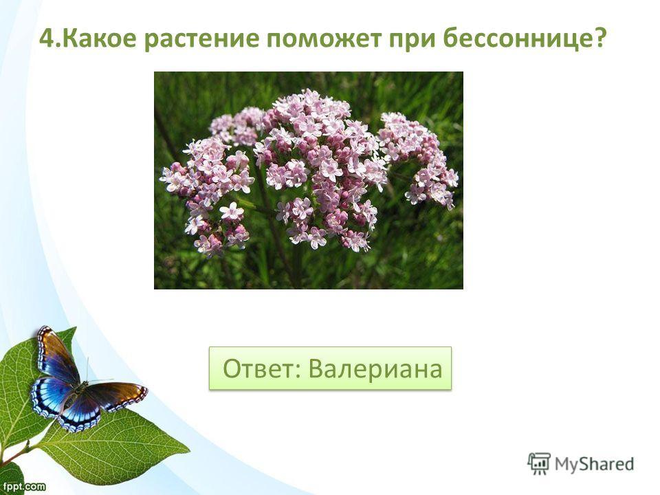 Ответ: Валериана 4. Какое растение поможет при бессоннице?