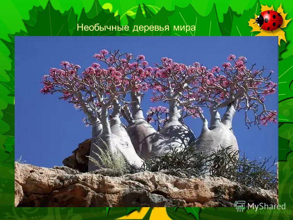 Далее Необычные деревья мира
