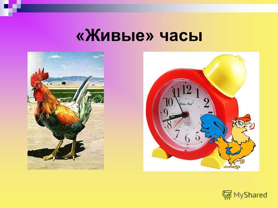«Живые» часы