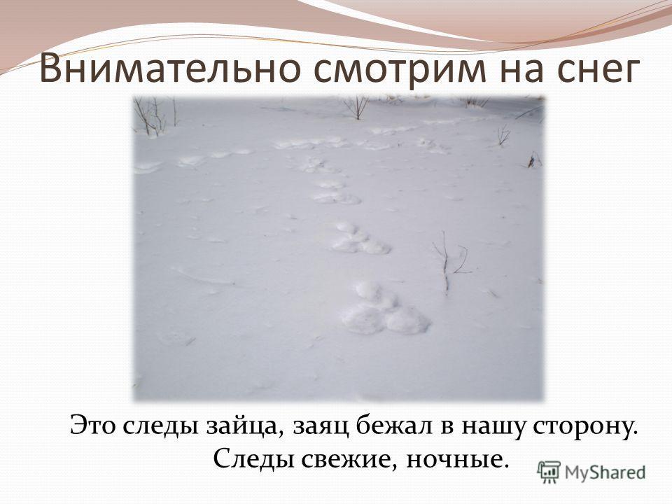 Внимательно смотрим на снег Это следы зайца, заяц бежал в нашу сторону. Следы свежие, ночные.