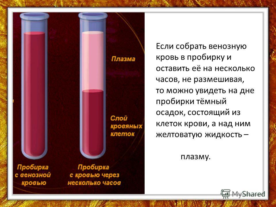 Если собрать венозную кровь в пробирку и оставить её на несколько часов, не размешивая, то можно увидеть на дне пробирки тёмный осадок, состоящий из клеток крови, а над ним желтоватую жидкость – плазму.