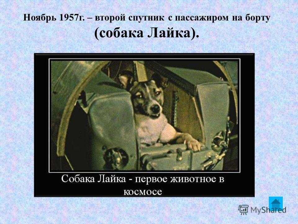 Ноябрь 1957 г. – второй спутник с пассажиром на борту (собака Лайка).