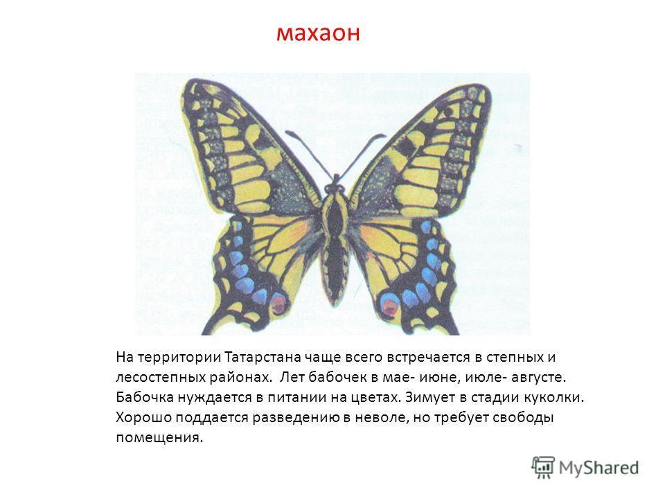 махаон На территории Татарстана чаще всего встречается в степных и лесостепных районах. Лет бабочек в мае- июне, июле- августе. Бабочка нуждается в питании на цветах. Зимует в стадии куколки. Хорошо поддается разведению в неволе, но требует свободы п