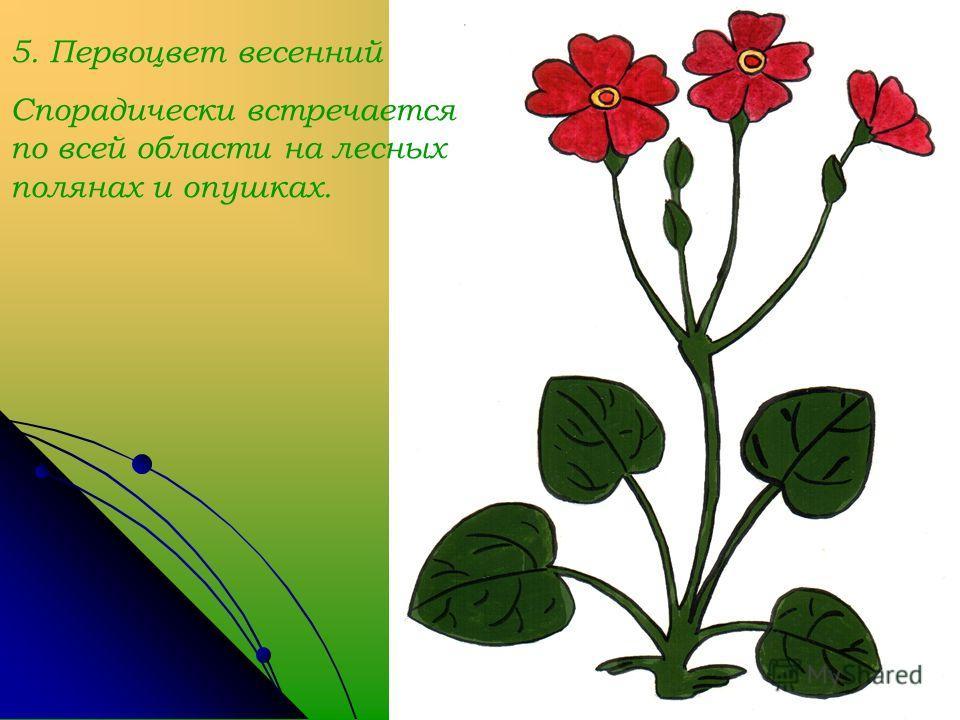 5. Первоцвет весенний Спорадически встречается по всей области на лесных полянах и опушках.