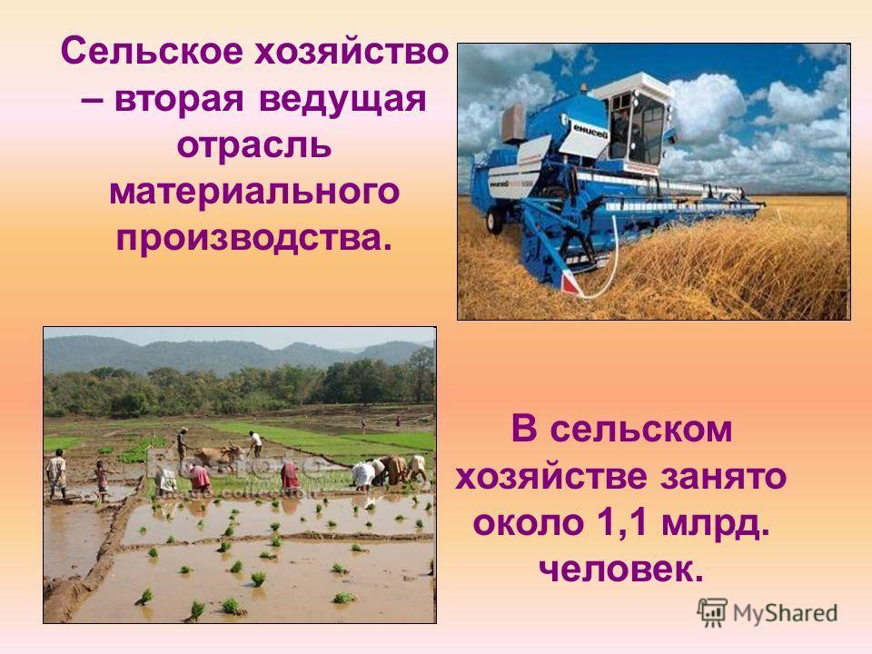 Сельское хозяйство – вторая ведущая отрасль материального производства. В сельском хозяйстве занято около 1,1 млрд. человек.