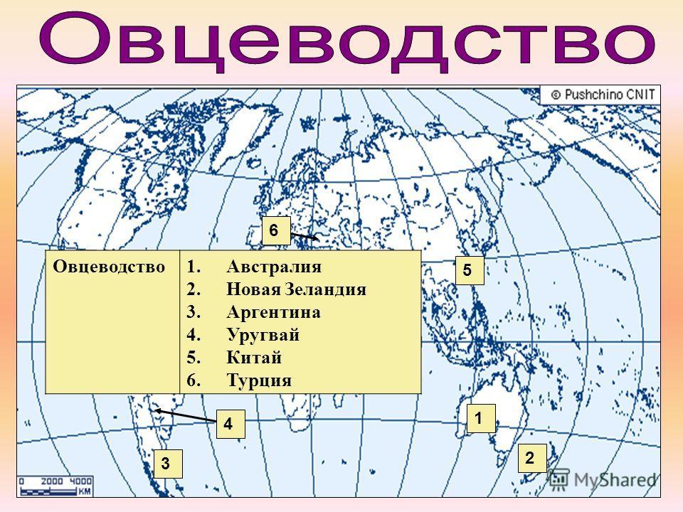 Овцеводство 1. Австралия 2. Новая Зеландия 3. Аргентина 4. Уругвай 5. Китай 6. Турция 5 4 3 2 1 6