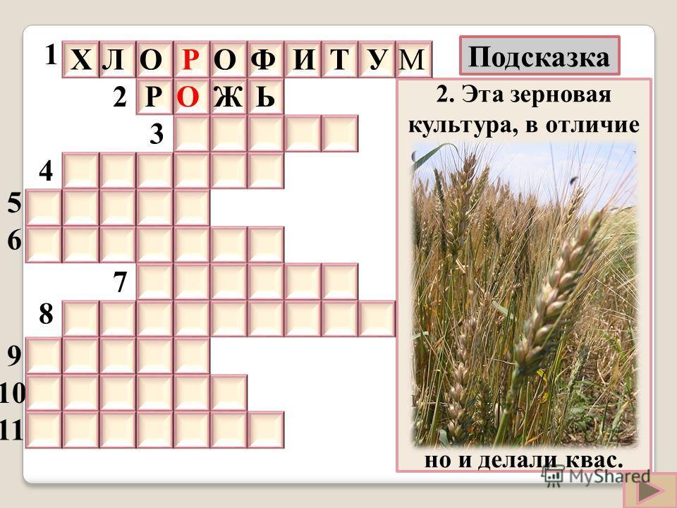 2. Эта зерновая культура, в отличие от пшеницы, может расти даже на скудной почве и в холодном климате. Этот злак обеспечивал крестьян пищей в трудные для них времена. Из него не только пекли хлеб, но и делали квас. 10 11 2 3 4 5 6 7 8 9 МУТИФОРОЛХ Р