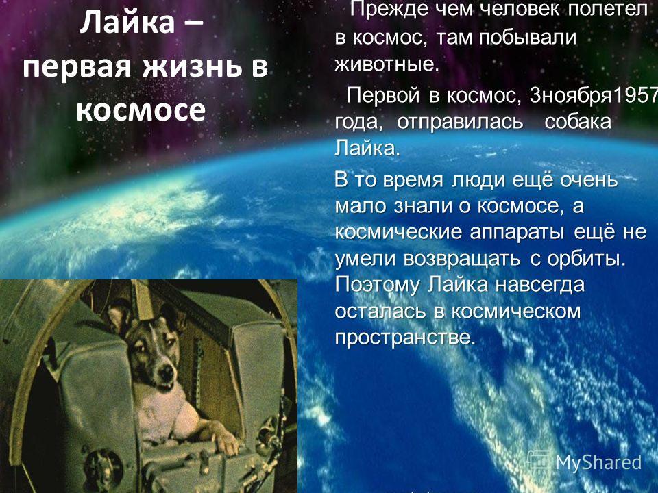Лайка – первая жизнь в космосе Прежде чем человек полетел в космос, там побывали животные. Первой в космос, 3 ноября 1957 года, отправилась собака Лайка. Первой в космос, 3 ноября 1957 года, отправилась собака Лайка. В то время люди ещё очень мало зн