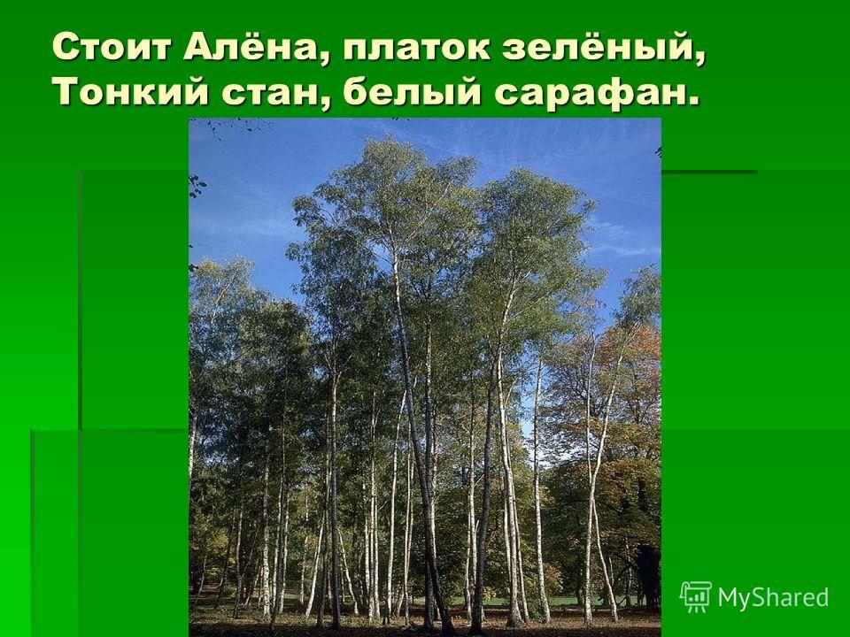 Стоит Алёна, платок зелёный, Тонкий стан, белый сарафан.