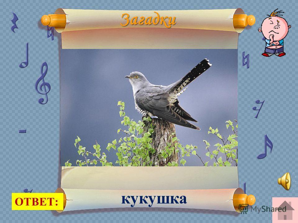 Загадки Кто эта птица? Никогда Не строит для себя гнезда, Соседкам яйца оставляет И о птенцах не вспоминает. ОТВЕТ: кукушка