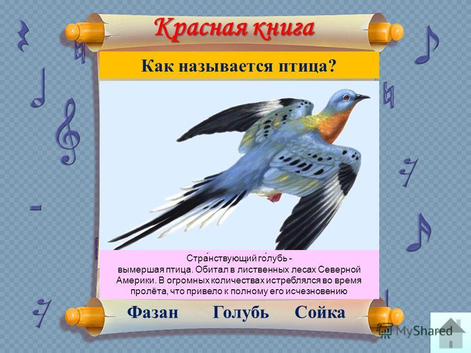 Красная книга Сойка ГолубьФазан Как называется птица? Стра́нствующий го́лубь - вымершая птица. Обитал в лиственных лесах Северной Америки. В огромных количествах истреблялся во время пролёта, что привело к полному его исчезновению