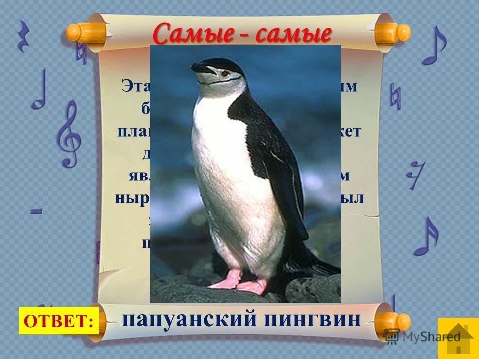 Эта птица считается самым быстрым пловцом, при плаванье его скорость может достигать 36 км/ч. Она является самым глубоким ныряльщиком, 1990 году был зафиксирован случай погружения на глубину в 483 метра. ОТВЕТ: папуанский пингвин Самые - самые