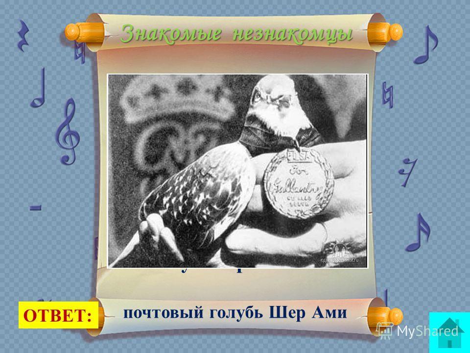 Знакомые незнакомцы Эта единственная птица, удостоенная военной награды. Доставляя сообщение во время первой мировой войны, она потеряла глаз и ногу. Она получила медаль «За отвагу» и протез ноги. ОТВЕТ: почтовый голубь Шер Ами