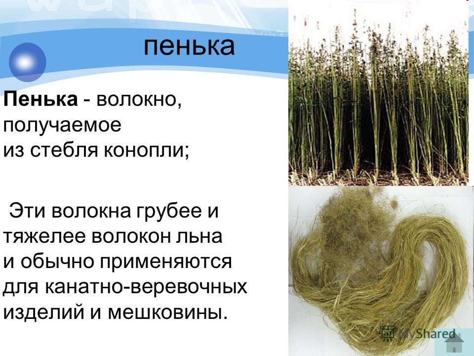 пенька Пенька - волокно, получаемое из стебля конопли; Эти волокна грубее и тяжелее волокон льна и обычно применяются для канатно-веревочных изделий и мешковины.