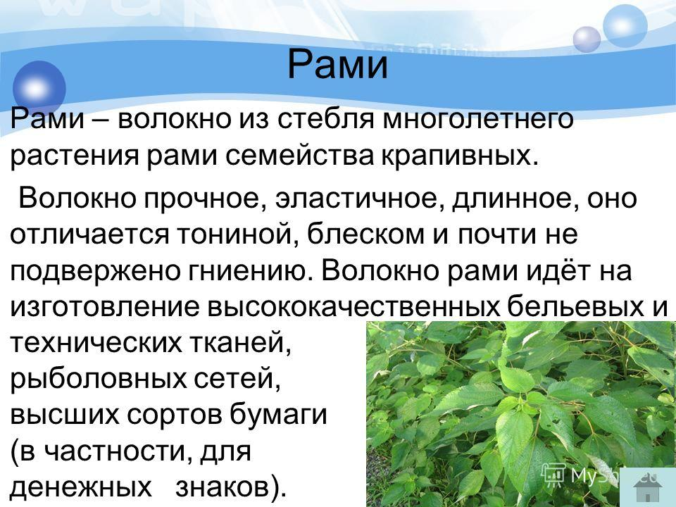 Рами Рами – волокно из стебля многолетнего растения рами семейства крапивных. Волокно прочное, эластичное, длинное, оно отличается тониной, блеском и почти не подвержено гниению. Волокно рами идёт на изготовление высококачественных бельевых и техниче
