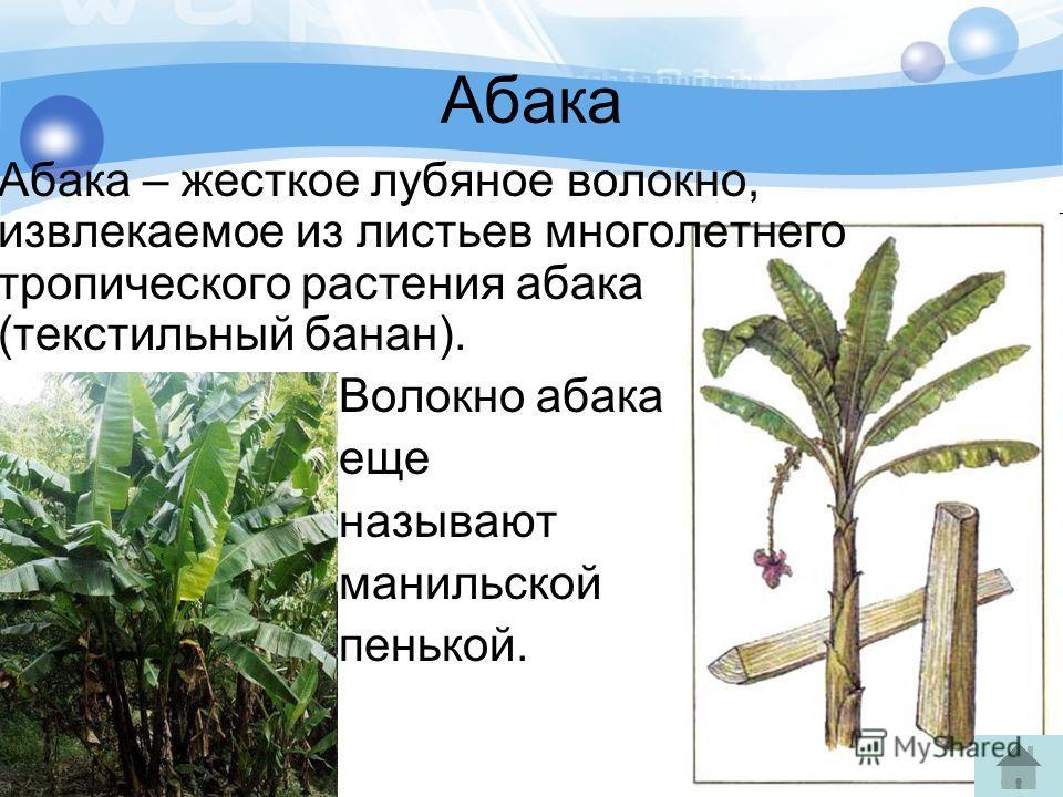 Абака Абака – жесткое лубяное волокно, извлекаемое из листьев многолетнего тропического растения абака (текстильный банан). Волокно абака еще называют манильской пенькой.