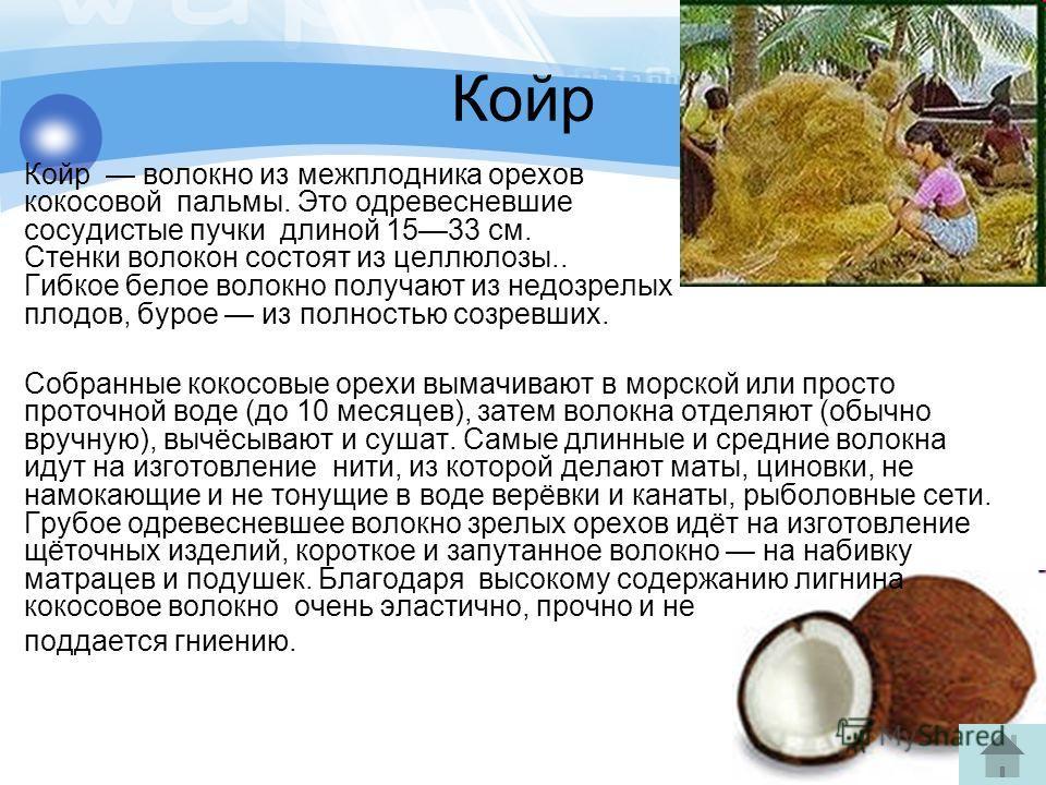 Койр Койр волокно из межплодника орехов кокосовой пальмы. Это одревесневшие сосудистые пучки длиной 1533 см. Стенки волокон состоят из целлюлозы.. Гибкое белое волокно получают из недозрелых плодов, бурое из полностью созревших. Собранные кокосовые о