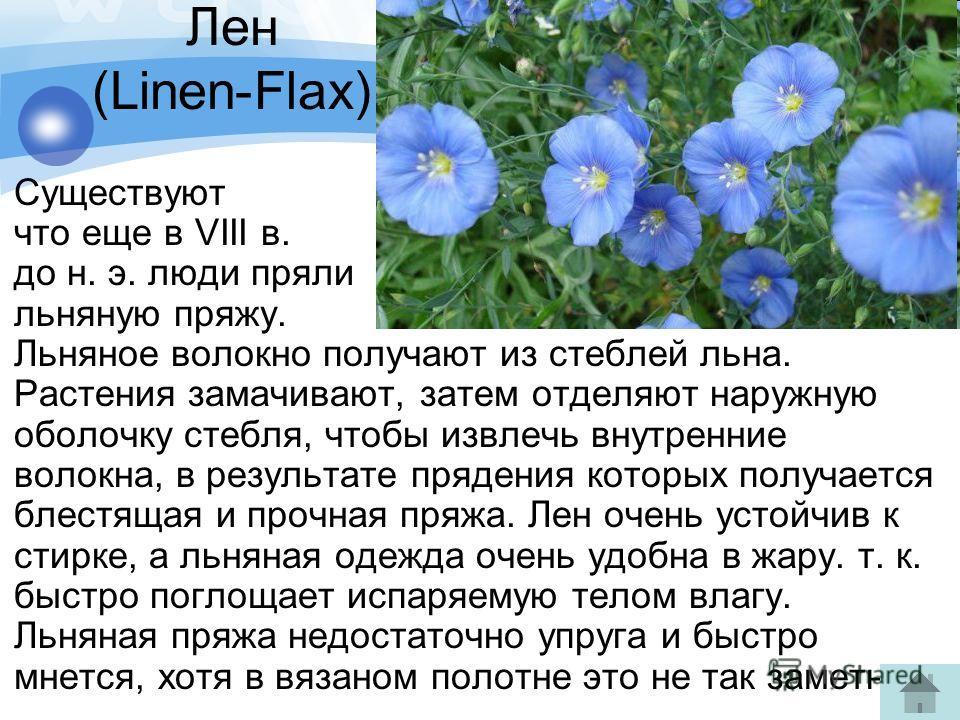 Лен (Linen-Flax) Существуют свидетельства, что еще в VIII в. до н. э. люди пряли льняную пряжу. Льняное волокно получают из стеблей льна. Растения замачивают, затем отделяют наружную оболочку стебля, чтобы извлечь внутренние волокна, в результате пря
