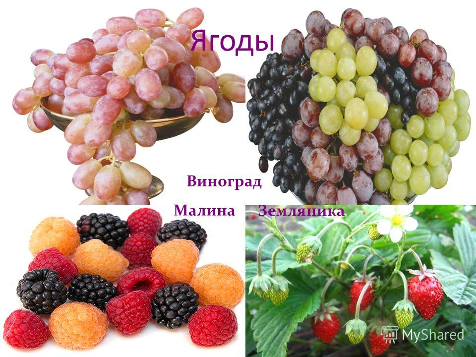 Ягоды Виноград Малина Земляника