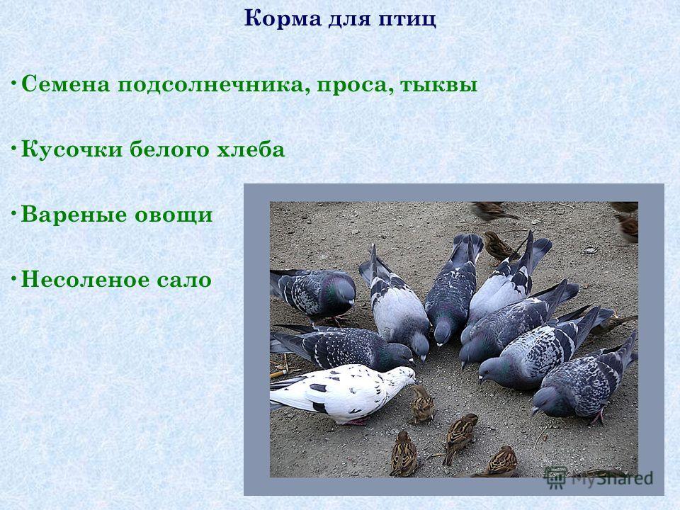 Корма для птиц Семена подсолнечника, проса, тыквы Кусочки белого хлеба Вареные овощи Несоленое сало
