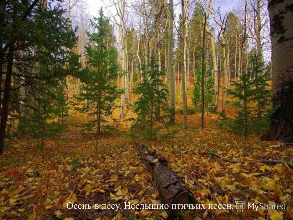 Осень в лесу. Неслышно птичьих песен.