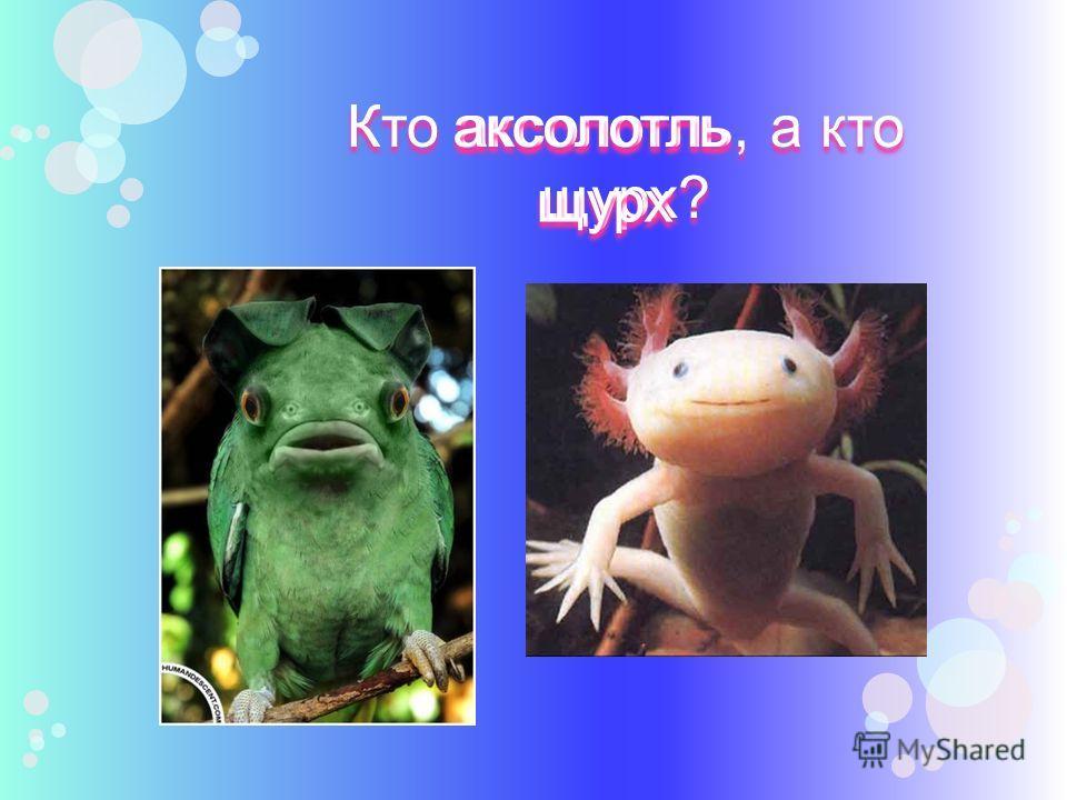 Кто, по-вашему, из этих зверей мамалына, а кто жаваруга? мамалына жаваруга