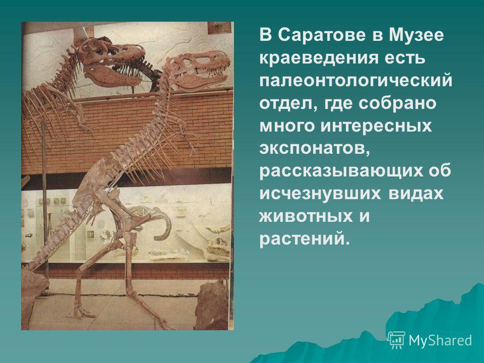 В Саратове в Музее краеведения есть палеонтологический отдел, где собрано много интересных экспонатов, рассказывающих об исчезнувших видах животных и растений.