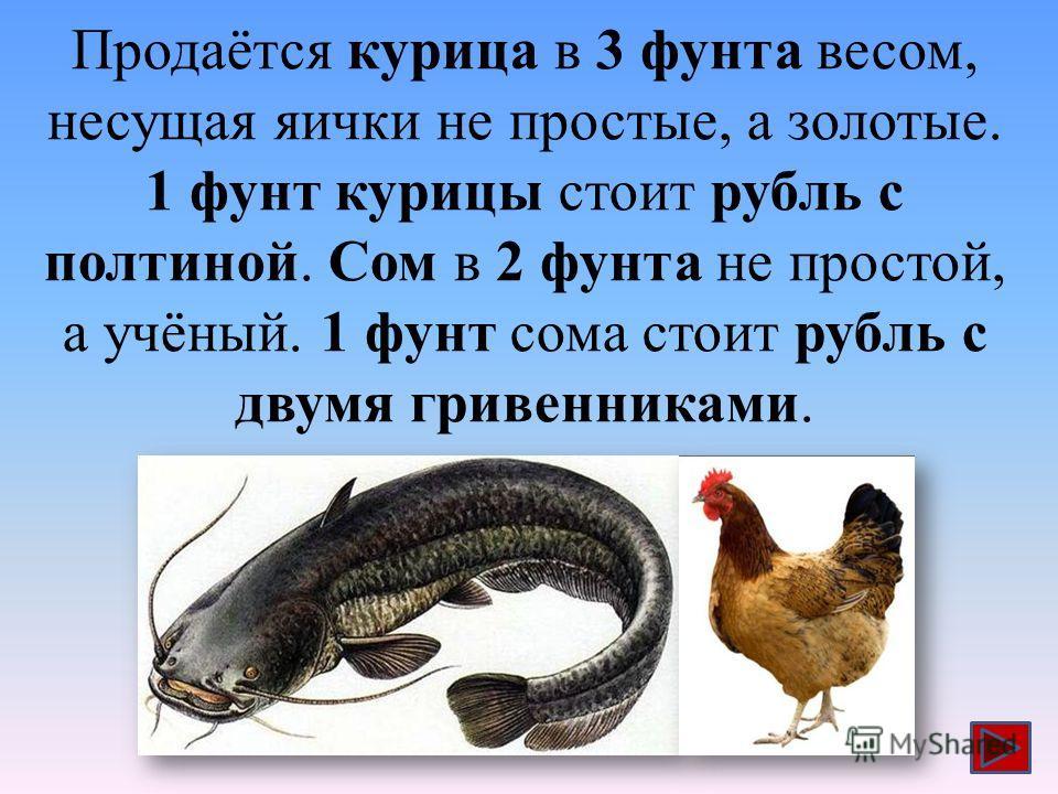 Продаётся курица в 3 фунта весом, несущая яички не простые, а золотые. 1 фунт курицы стоит рубль с полтиной. Сом в 2 фунта не простой, а учёный. 1 фунт сома стоит рубль с двумя гривенниками.