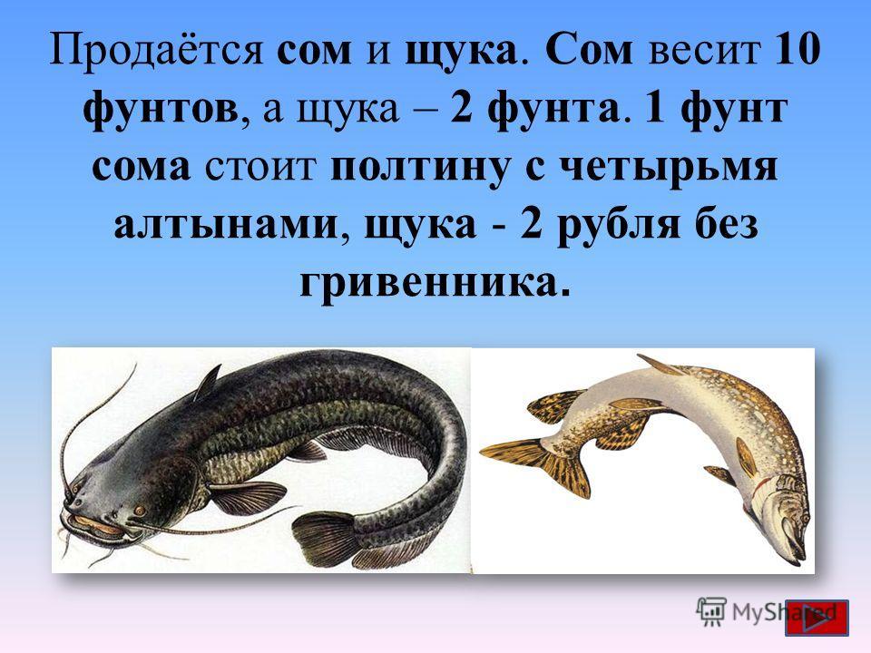 Продаётся сом и щука. Сом весит 10 фунтов, а щука – 2 фунта. 1 фунт сома стоит полтину с четырьмя алтынами, щука - 2 рубля без гривенника.