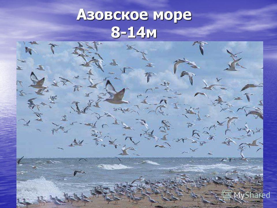 Азовское море 8-14 м