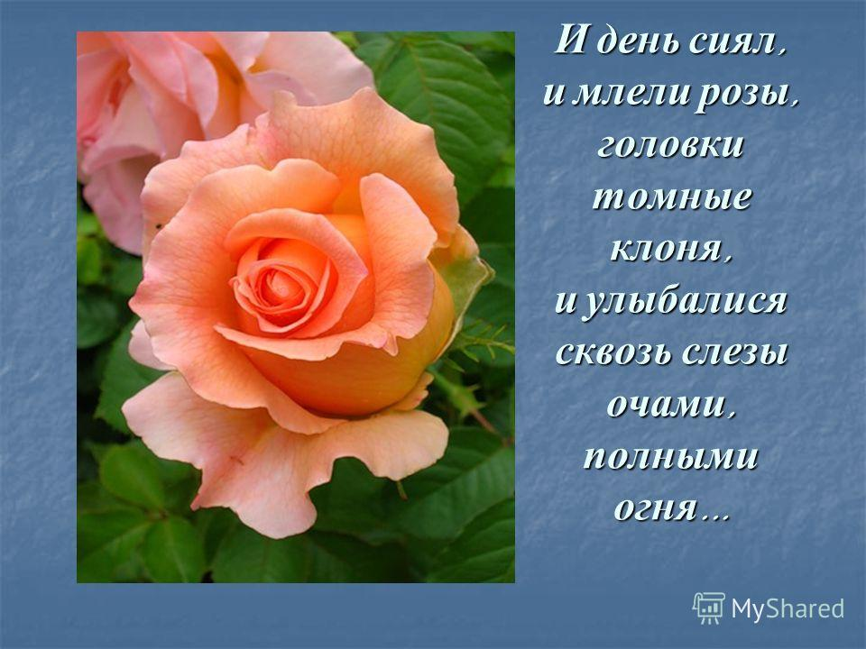 И день сиял, и млели розы, головки томные клоня, и улыбалися сквозь слезы очами, полными огня...