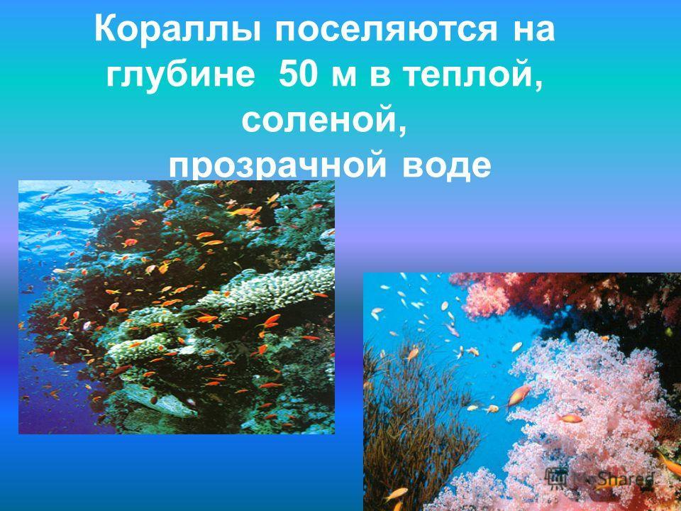 Кораллы поселяются на глубине 50 м в теплой, соленой, прозрачной воде