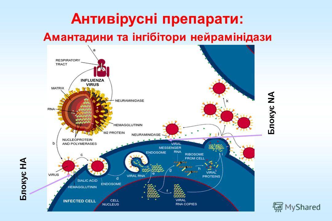 Антивірусні препарати: Амантадини та інгібітори нейрамінідази Блокує NA Блокує HA
